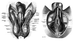 睾丸マッサージ